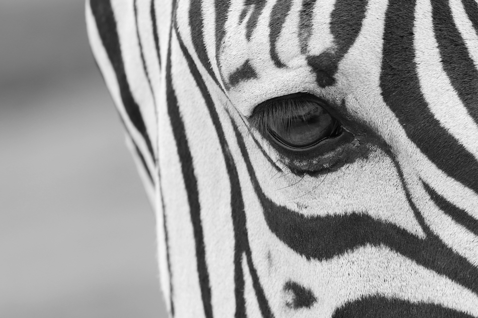 unicorn_companies_vs_zebra_companies